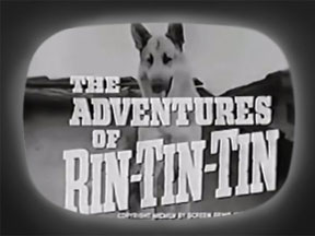 rin tin tin tv show